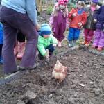 2014 planting 2